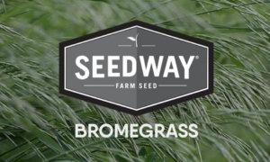 ADMIRAL Meadow Bromegrass