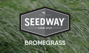 ARID Smooth Bromegrass