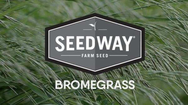 PEAK Smooth Bromegrass