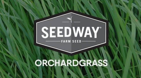 EXTEND Orchardgrass