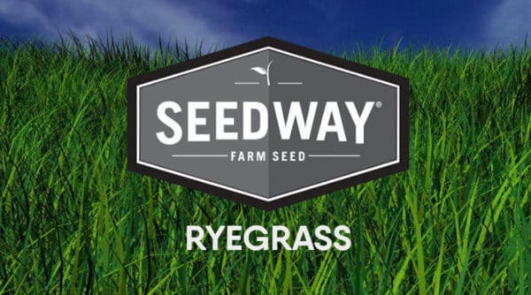 BIGBANG Annual Ryegrass