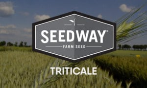 HYOCTANE WINTER FORAGE TRITICALE